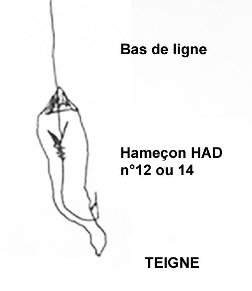 teigne