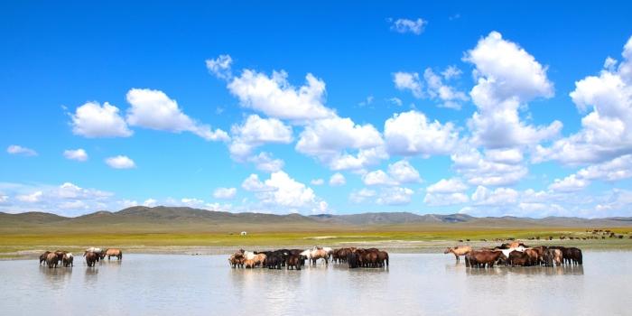 Mongolie Août 2014 09